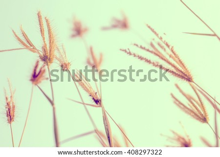 meadow flowers in early sunny fresh morning. Vintage autumn landscape - stock photo