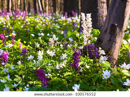 meadow flowers in spring forest - stock photo
