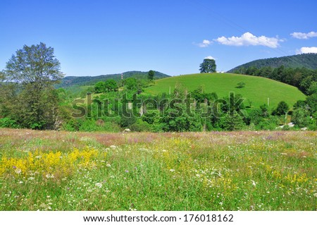 meadow flowers in summer - stock photo