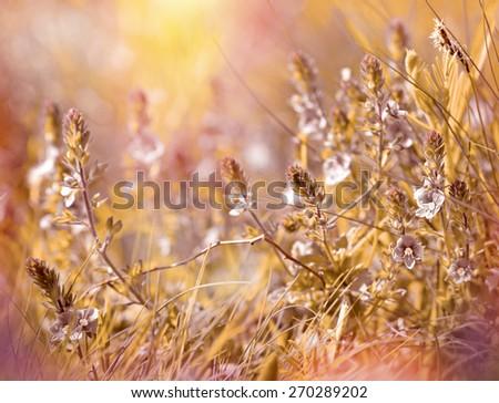Meadow flowers - meadow in spring - stock photo