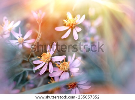 Meadow flowers - purple flowers - stock photo