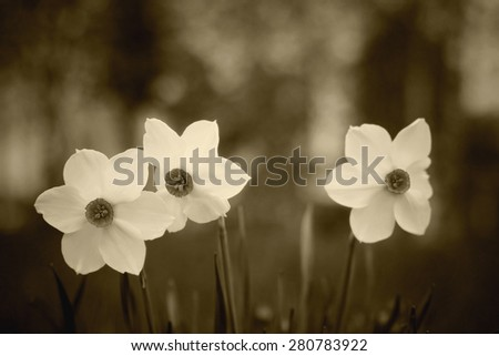 meadow flowers summer landscape - stock photo
