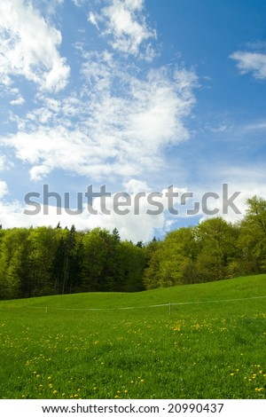 Meadow, forest and blue sky with clouds. Including copy space.