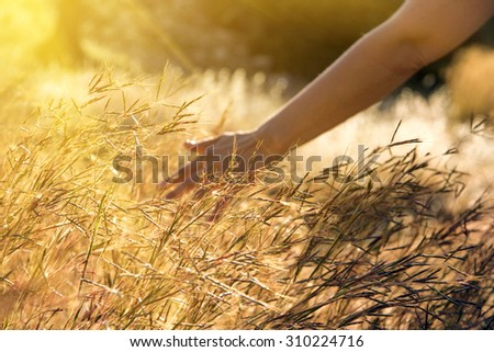 Meadow grass in the morning sun, young woman walking - stock photo