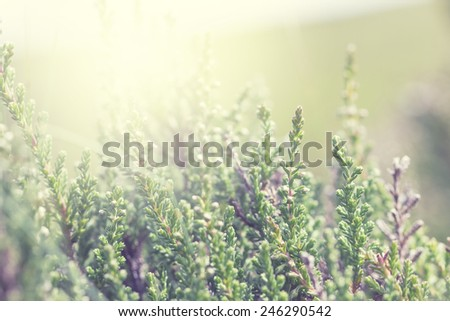 meadow green flowers and grass - stock photo