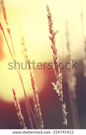 meadow herbs - stock photo
