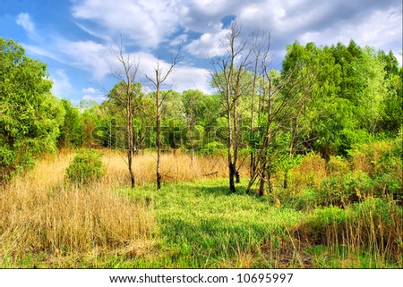 Meadow in marsh land forest under dramatic skies. Shot in Ukraine.
