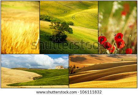 meadow in spring collage - stock photo