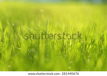Meadow in sunlight. Shallow depth of field.  - stock photo