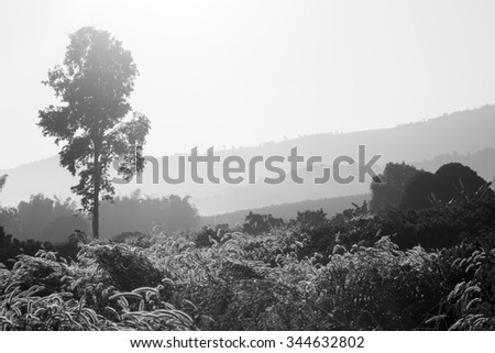Meadow landscape with fog on morning sun light. - stock photo