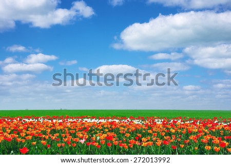 Meadow of tulips. Composition of spring nature. - stock photo