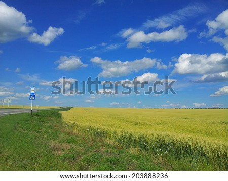 Meadow of wheat. Beautiful landscape.  bus stop sign at roadside,Belgorod Oblast. Russia.  - stock photo