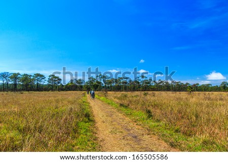 Meadow Path in Phu Kradueng National Park Asia Thailand