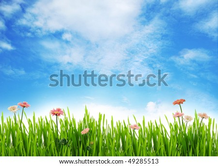 Meadow scenery with daisies and blue sky - stock photo