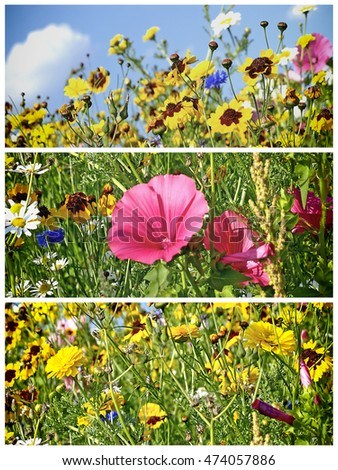 meadow with a lot of colored flowers