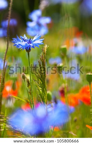 Meadow with beautiful red poppies. Blurred flowers on first plan - stock photo
