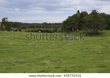 Meadow with cows in Maansta in Sweden.