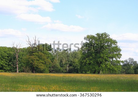 Meadow with death trees, solitary oaks and forest in the floodplain of the Elbe river in Saxony-Anhalt / Germany - stock photo