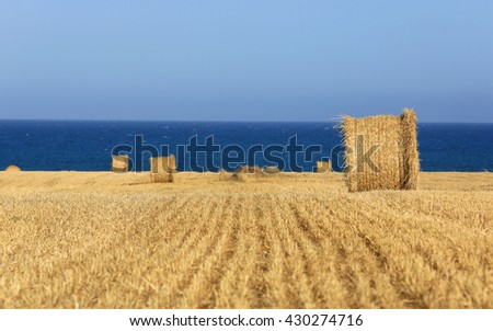 Meadow with hay rolls near sea