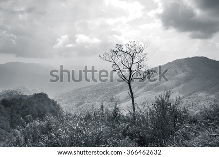 meadow with lonely tree on hill - stock photo