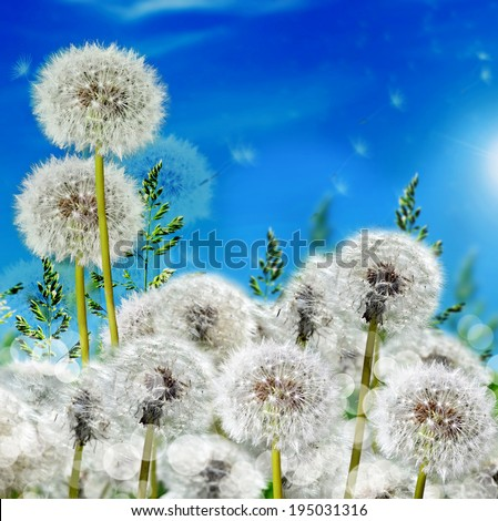 meadow with wild flowers dandelions on blue sky background - stock photo