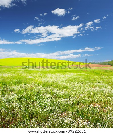 Meadow with wild herbs and blue sky