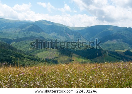 Meadow with wildflowers against the summer landscape in the Ukrainian Carpathian Mountains. - stock photo