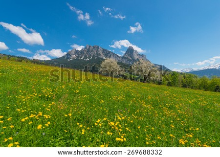 Meadow with wildflowers. Mountains in the background. Blue sky with a few clouds. Trees in bloom.