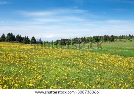 Meadow with yellow blooming dandelion. Taken on a plateau in the Swabian Alps, Germany.  - stock photo