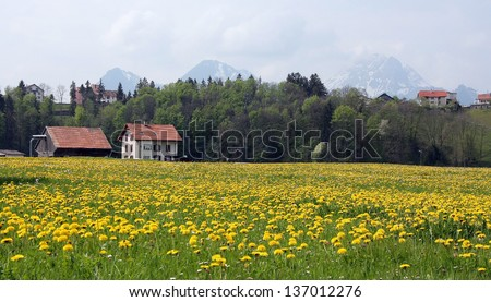 Meadow with yellow flowers and house on a background of mountains