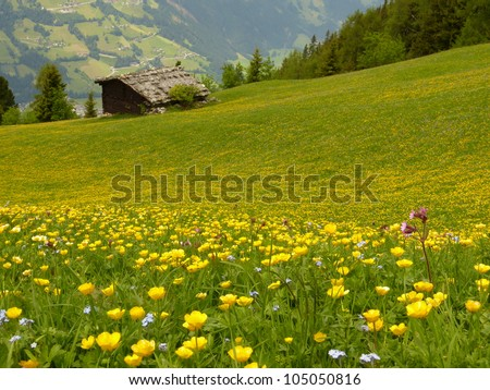 meadow with yellow flowers and wooden house - stock photo
