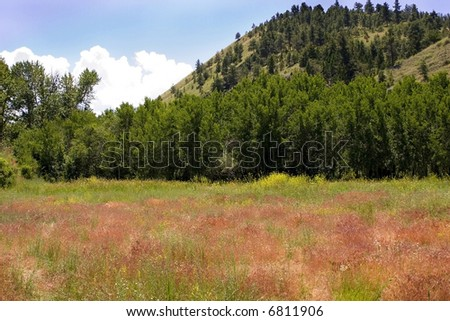 Meadows and Country View in Helena Montana
