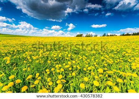 Meadows in the forest illuminated by the sun, covered in dandelions on a cloudy spring day - stock photo