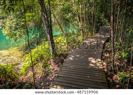 Meandering path by the water at Macritchie Reservoir, Singapore