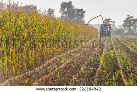 Mechanical harvesting of organic cultivated fodder maize plants at the end of a sunny day in the beginning of the autumn season. - stock photo