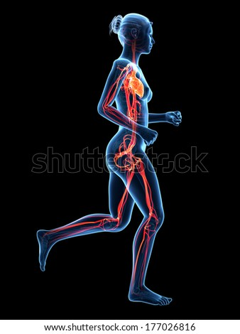 medical 3d illustration - jogging woman - visible cardiovascular system - stock photo