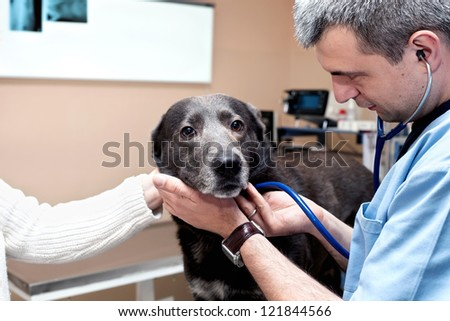 Medical examination of my dog to the vet - stock photo