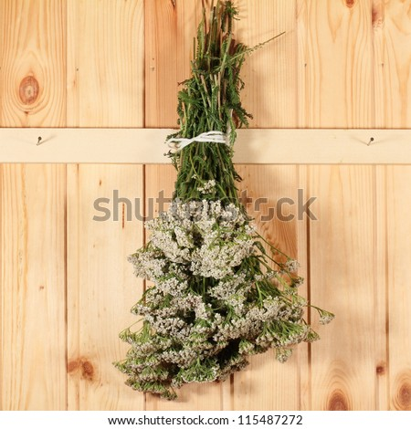 medical freshly picked herbs to dry - yarrow - stock photo