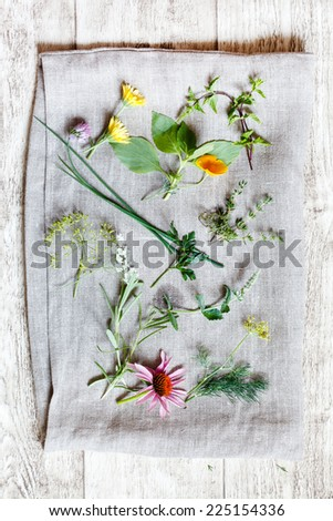 medical herbs - stock photo