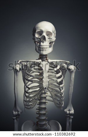 medical skeleton model with dramatic light - stock photo