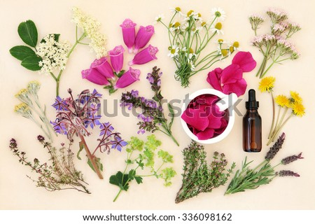 Medicinal flower and herb selection with dropper bottle and mortar with pestle, used in alternative herbal medicine over handmade cream paper background. - stock photo