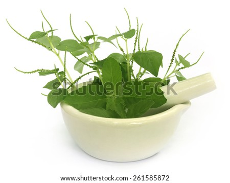 Medicinal herbs on mortar with pestle over white background - stock photo
