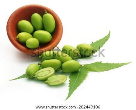 Medicinal neem fruits over white background - stock photo