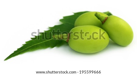 Medicinal neem fruits with green leaf - stock photo