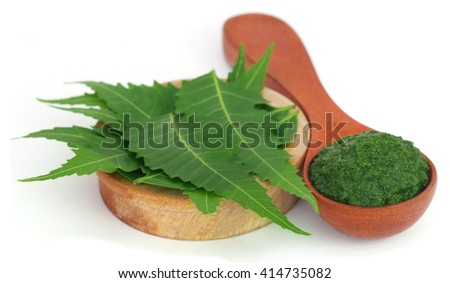 Medicinal neem leaves with ground paste in a wooden spoon over white background - stock photo