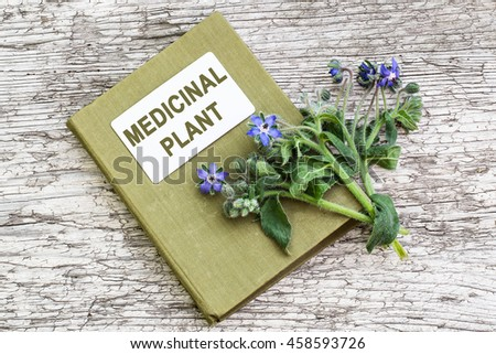 Medicinal plant borage (Borago officinalis), also known as a starflower and herbalist handbook. Used in herbal medicine, healthy eating, oil from the seeds is done for cosmetic purposes - stock photo