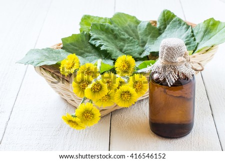 Medicinal plant coltsfoot (Tussilago farfara). The infusion, leaves and flowers in a basket. Selective focus - stock photo