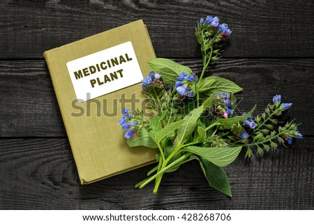 Medicinal plant comfrey (Symphytum officinale) and herbalist handbook. It is used for outdoor applications, promotes splicing bones. Caution, there are contraindications - stock photo