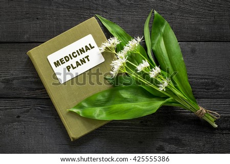 Medicinal plant ramson (allium ursinum) and herbalist handbook. Ramson - edible plant, nectariferous and is used in horticulture - stock photo