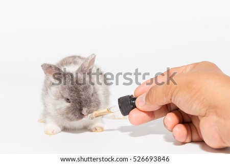 Medicine dropper for baby rabbit by feeding hand